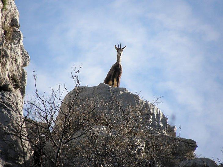 Wild Life in Paklenica Croatia