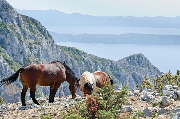Horses in nature park Biokovo