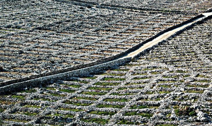 Primosten Croatia Vineyards