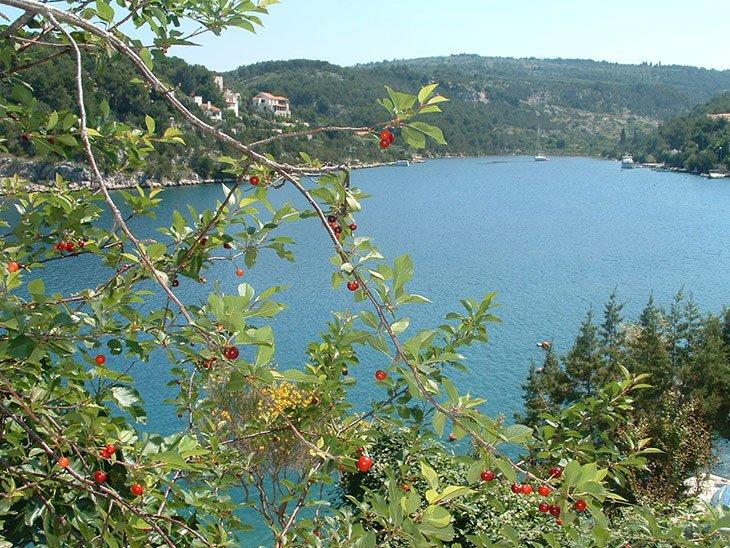 Bobovišća on island of the Brač, Croatia