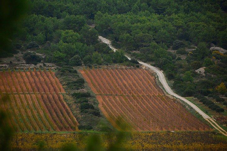 Vis Wine Vugava & Plavac Mali