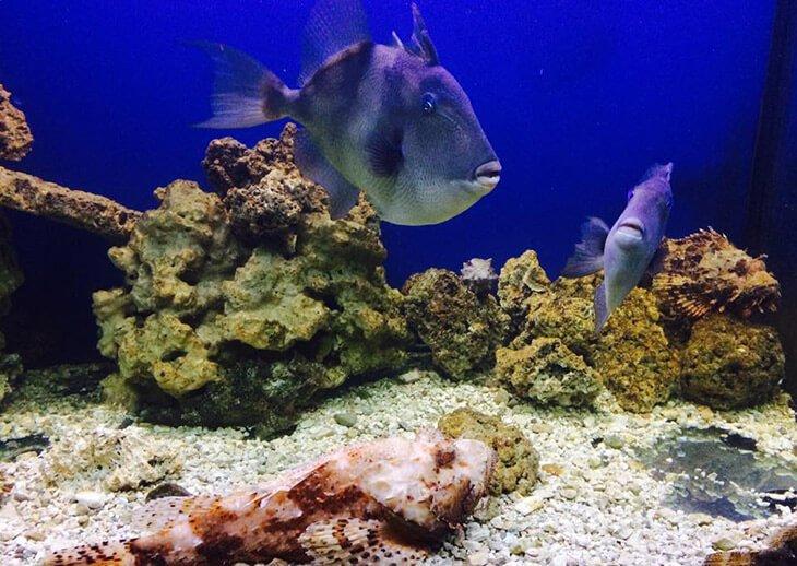 Aquarium Terrarium in Šibenik