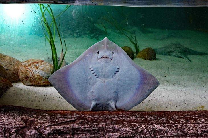Aquarium in Pula